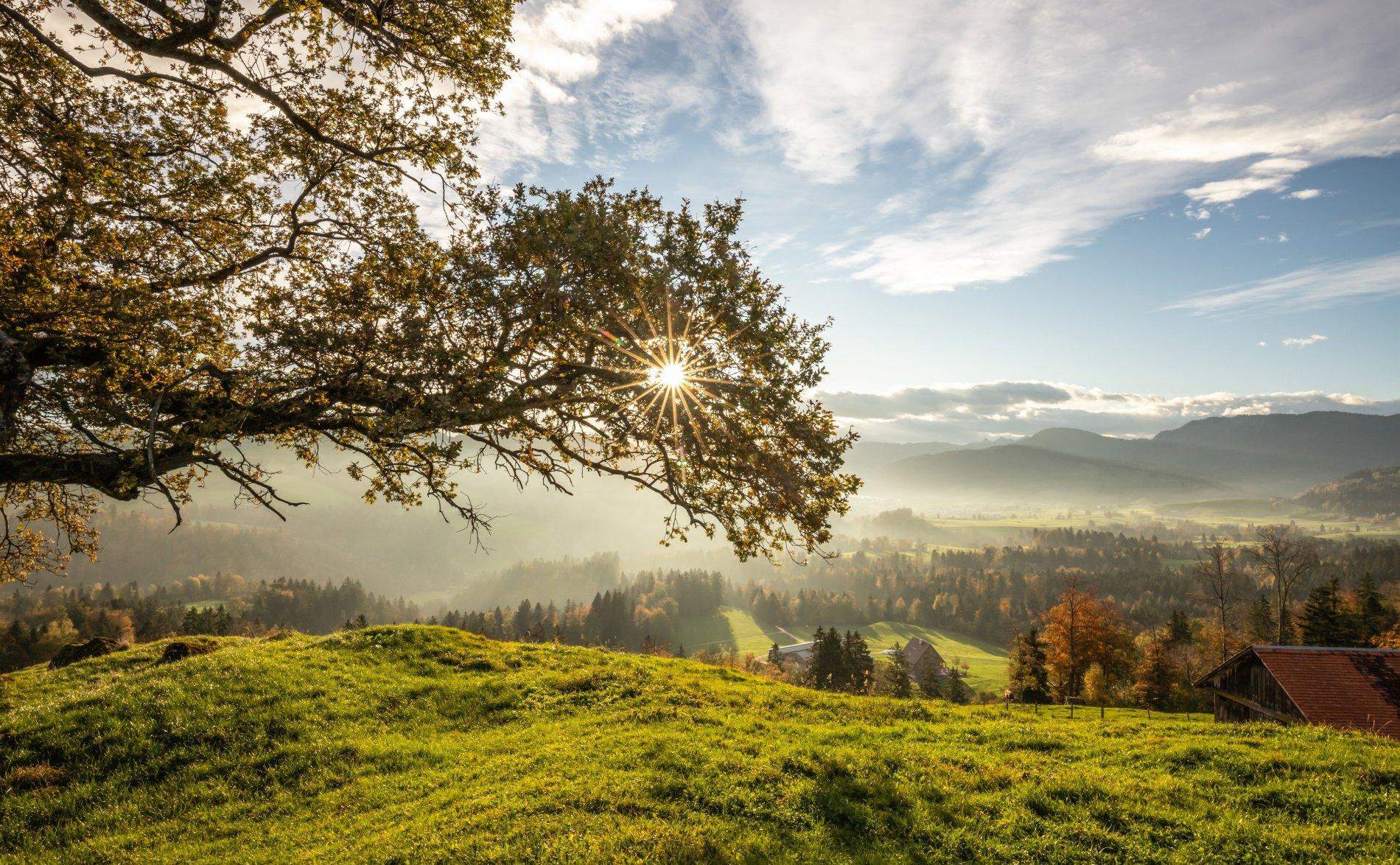 Fall at Zugerberg