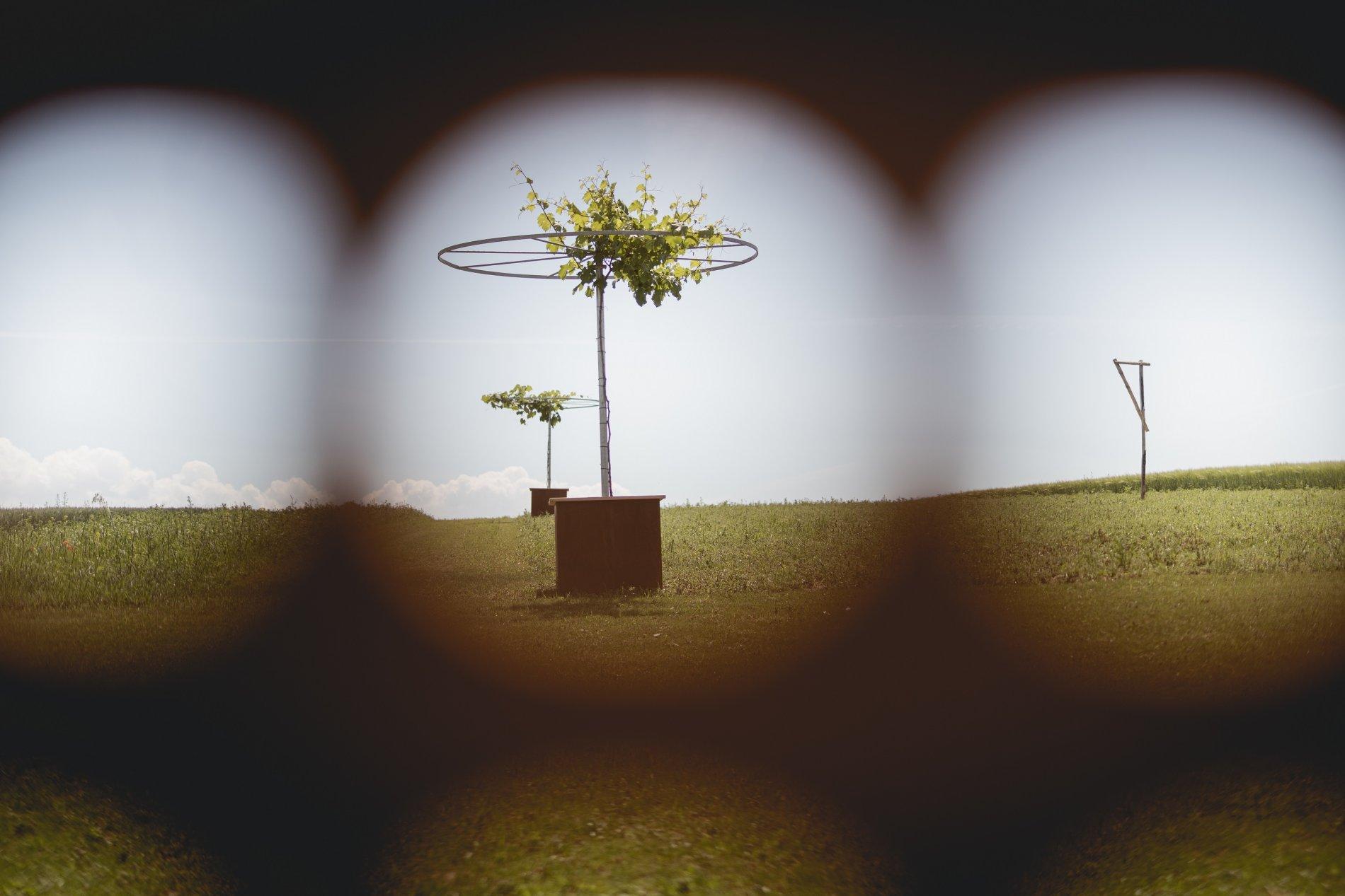 Weingut Martin Schropp | Erlenbach | HeilbronnerLand