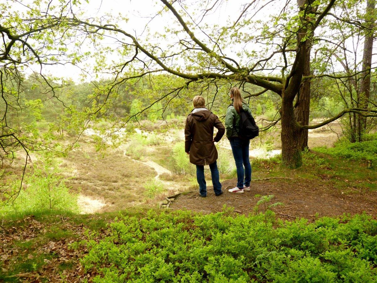Sandkuhle Steinfelder Holz