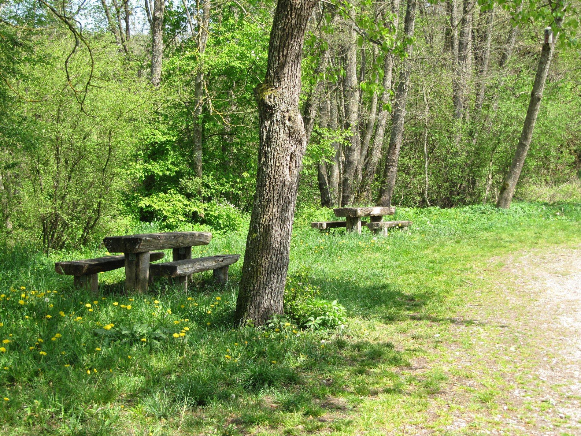 Sitzbänke mit Holztischen am Waldrand