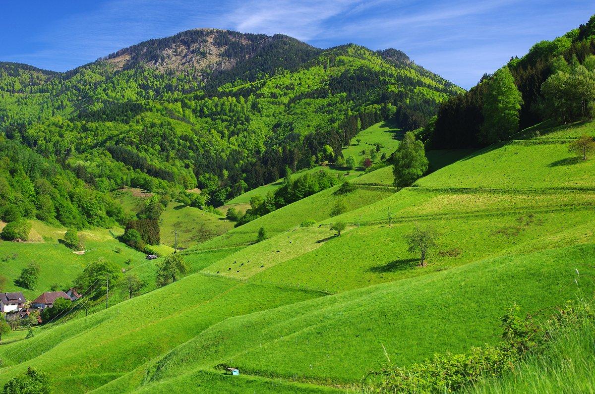 Blick vom Münstertal auf den Belchen im Frühjahr