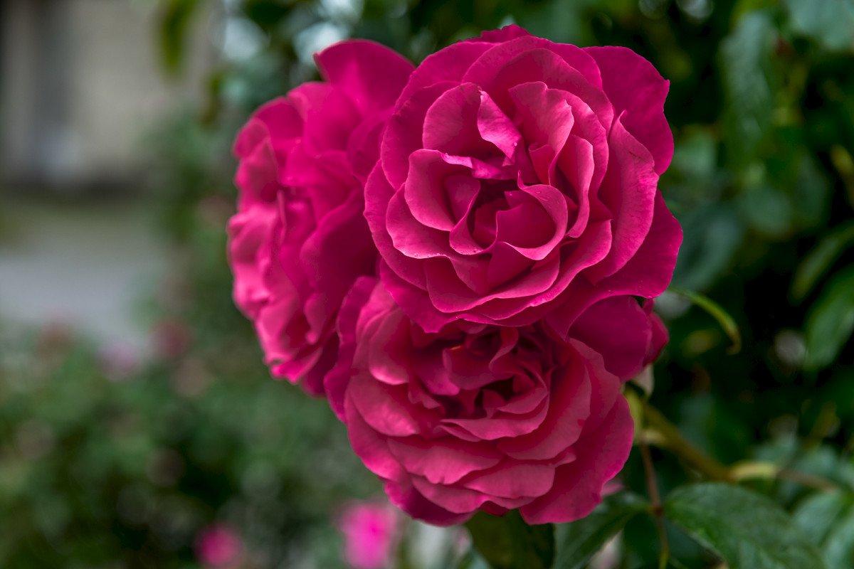 Schöne Aussichten auf dem Rosenwanderweg