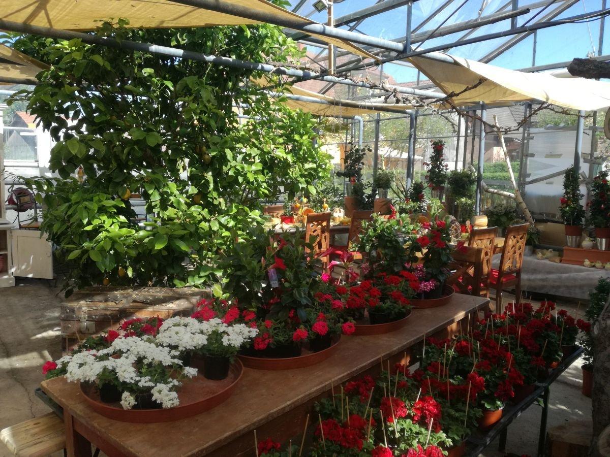 Gewächshaus Blumen Ruhland
