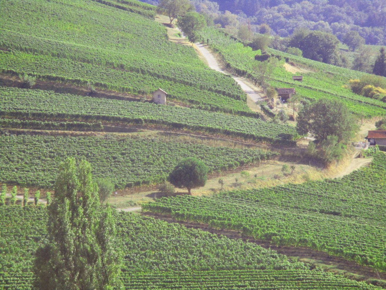 Bergstraßen Weinlandschaft
