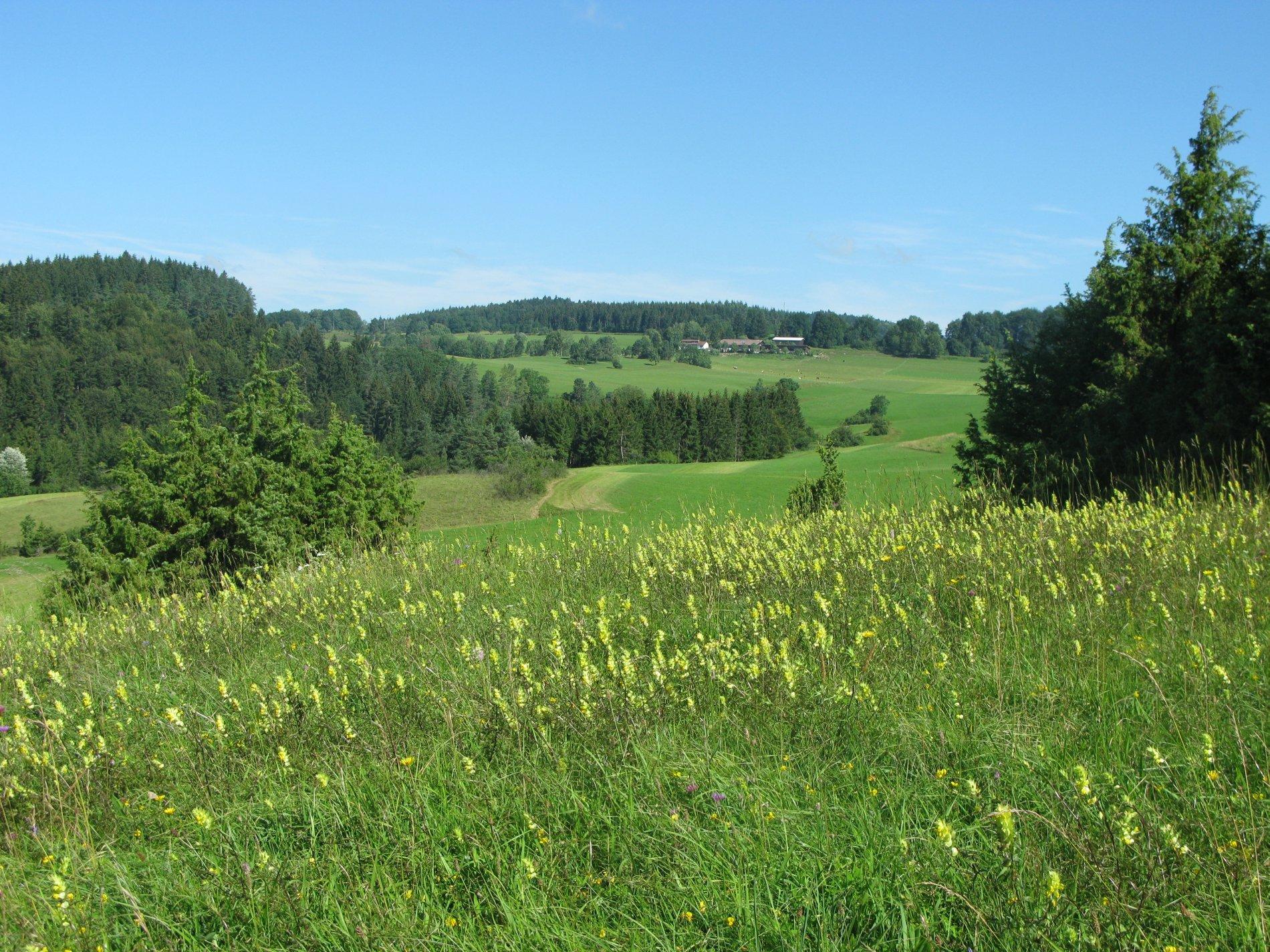 Weidelandschaft mit Blick zum Weiler Michelfeld