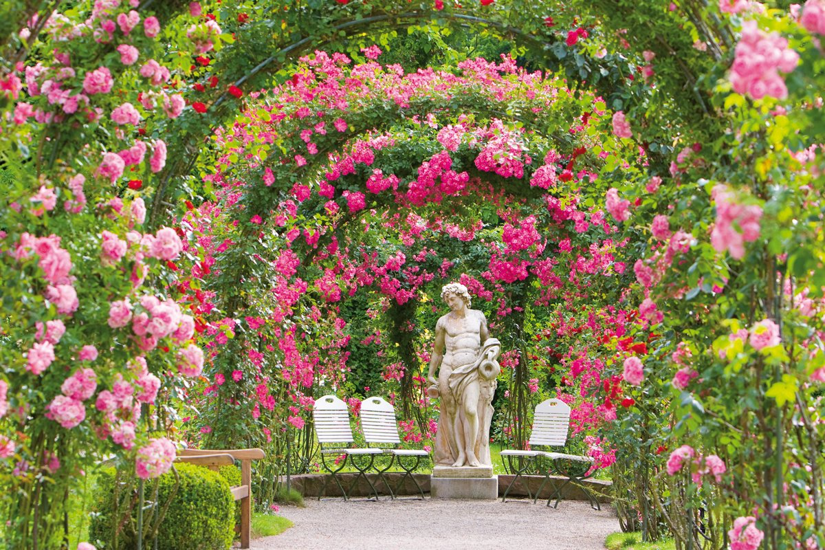 Rose Society Garden New Rose Garden