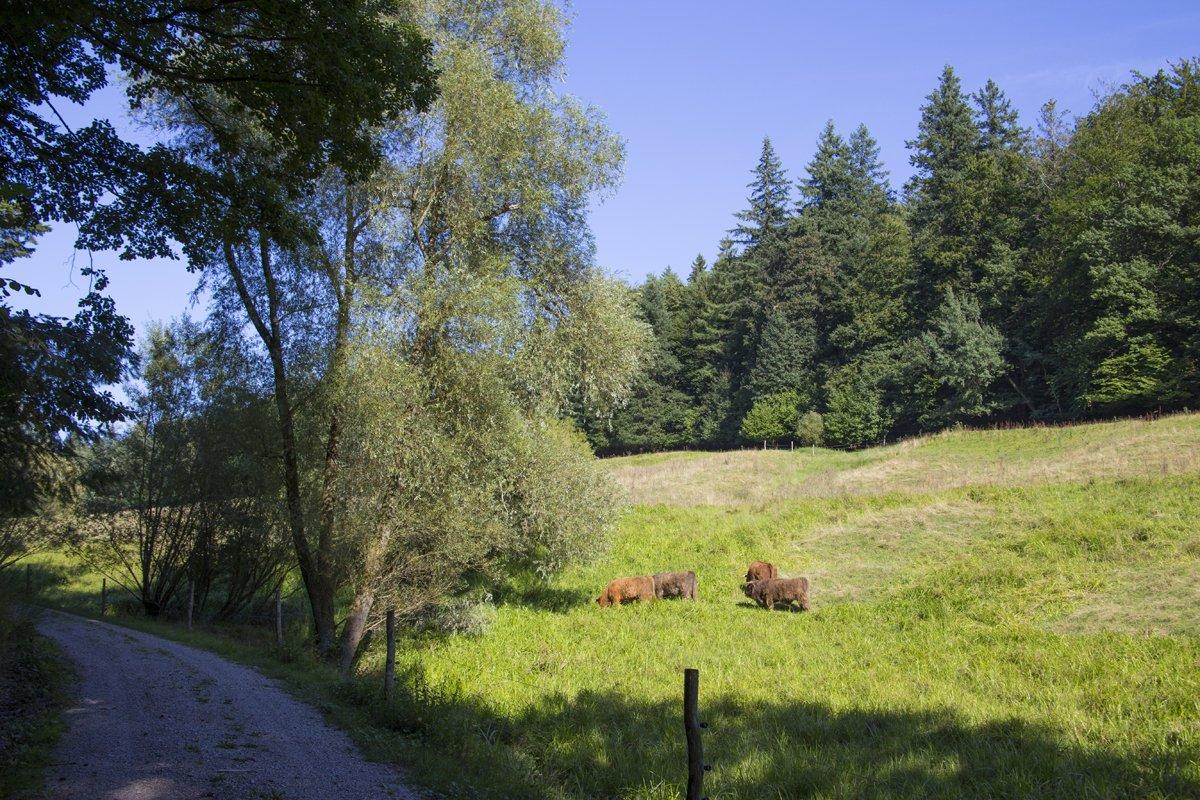 Oostal-Rundweg