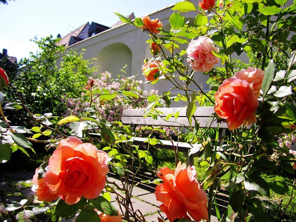 Bank neben dem Rosenbeet im Amtsgerichtsgarten in Freising