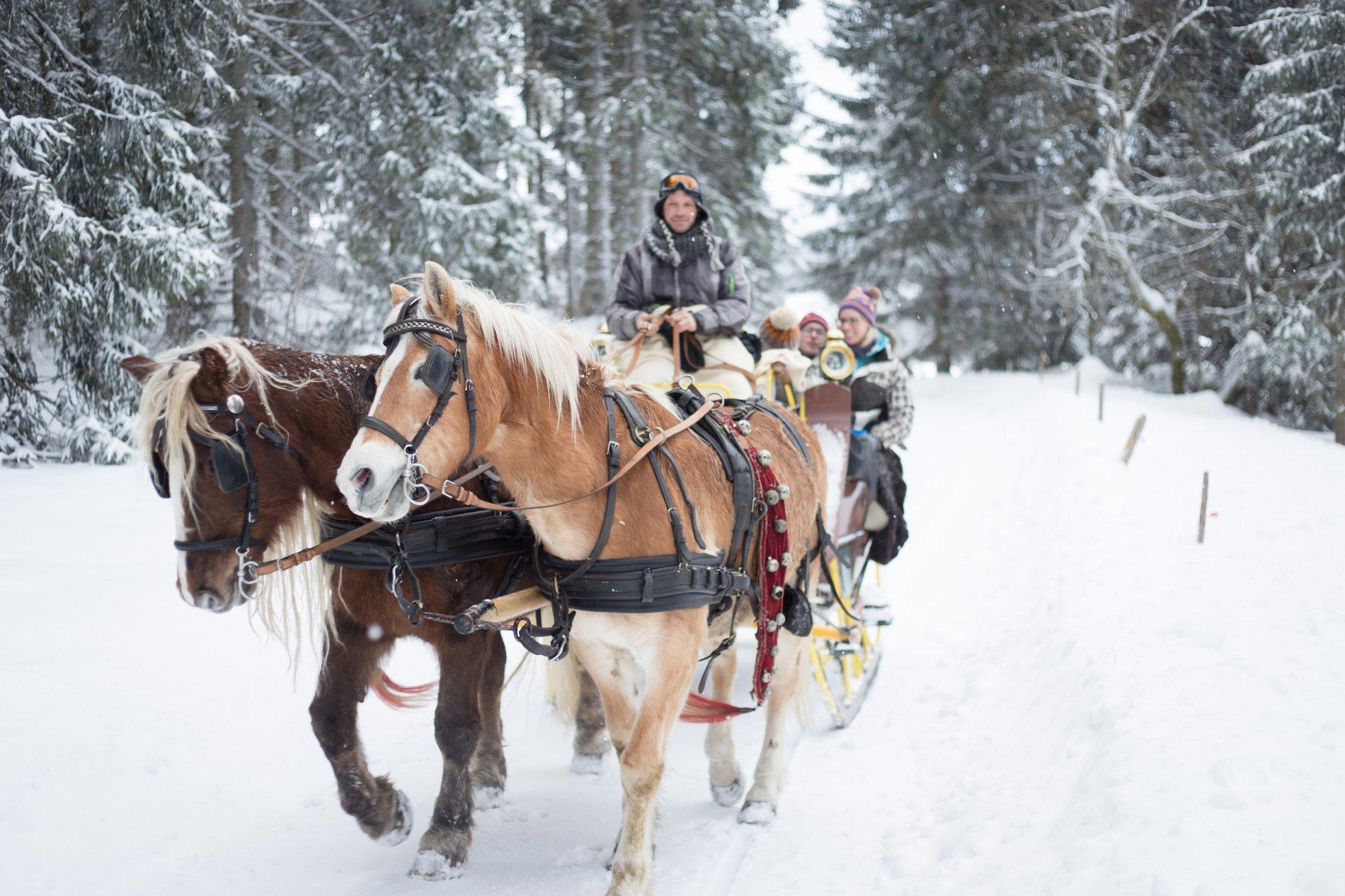Pferdeschlittenfahrt Reinertonishof Schönwald