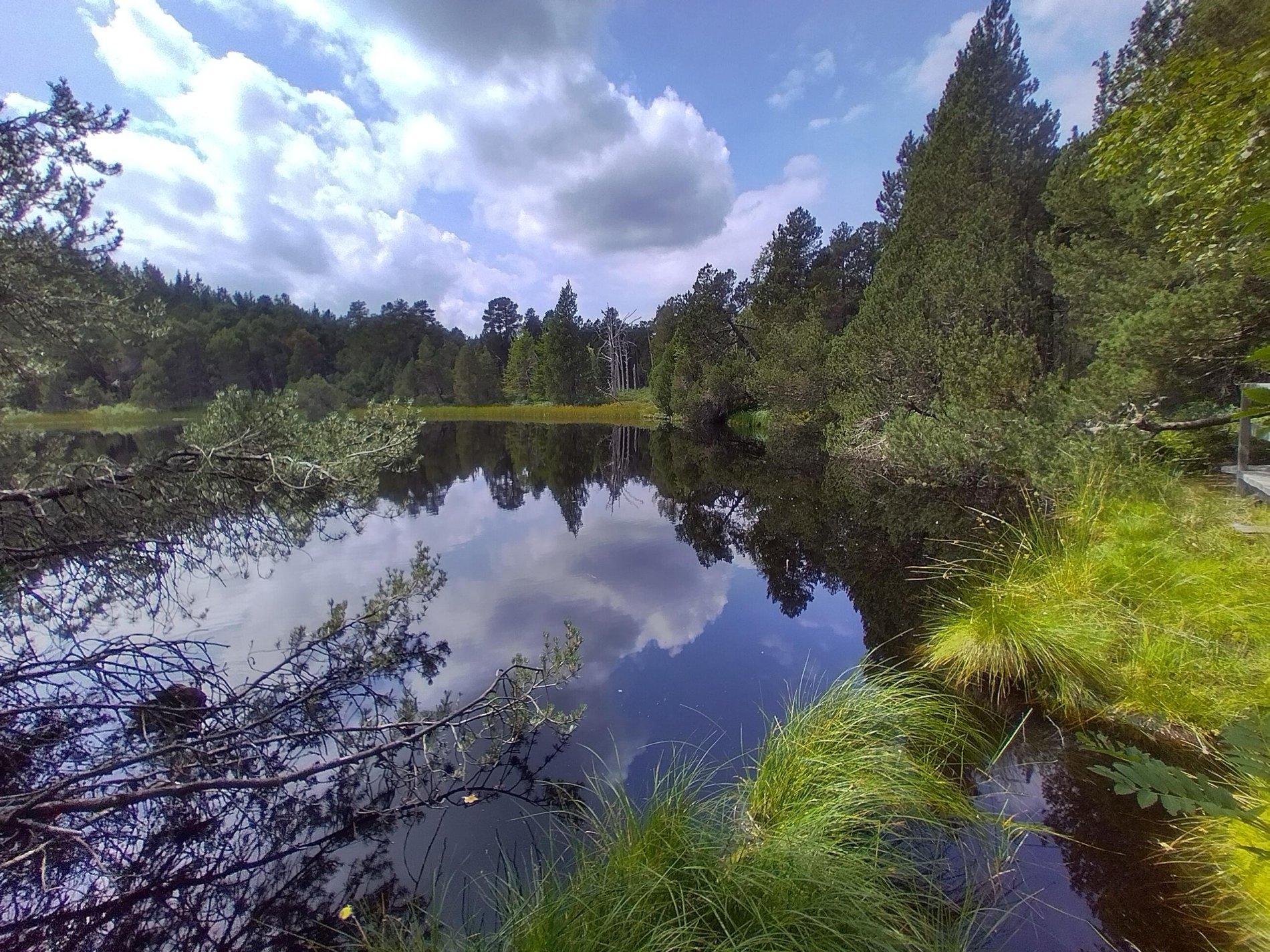 Naturschutzgebiet Hochmoor Blindensee