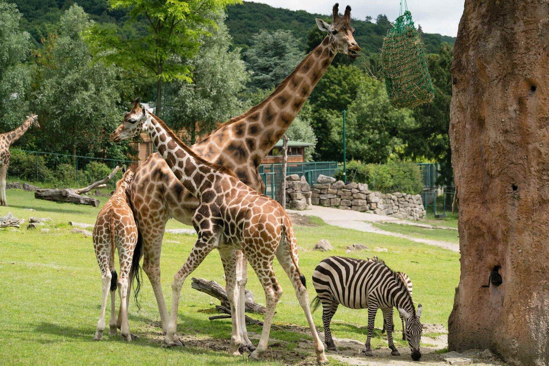 Taunus - Opel Zoo