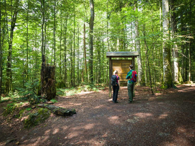 Mittelsteighütte Urwald