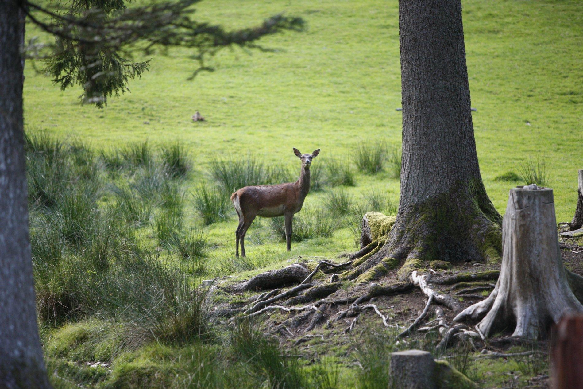 Wildlife reserve Baden-Baden