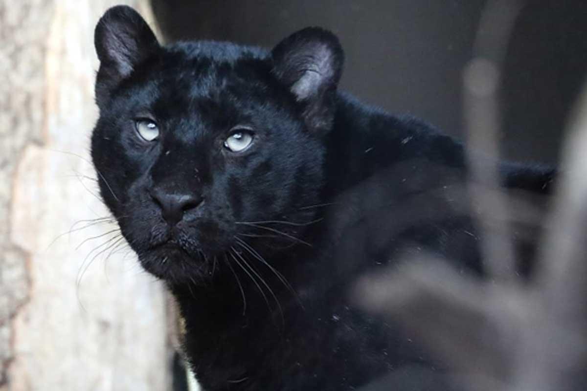 Sikypark Crérmines Löwen