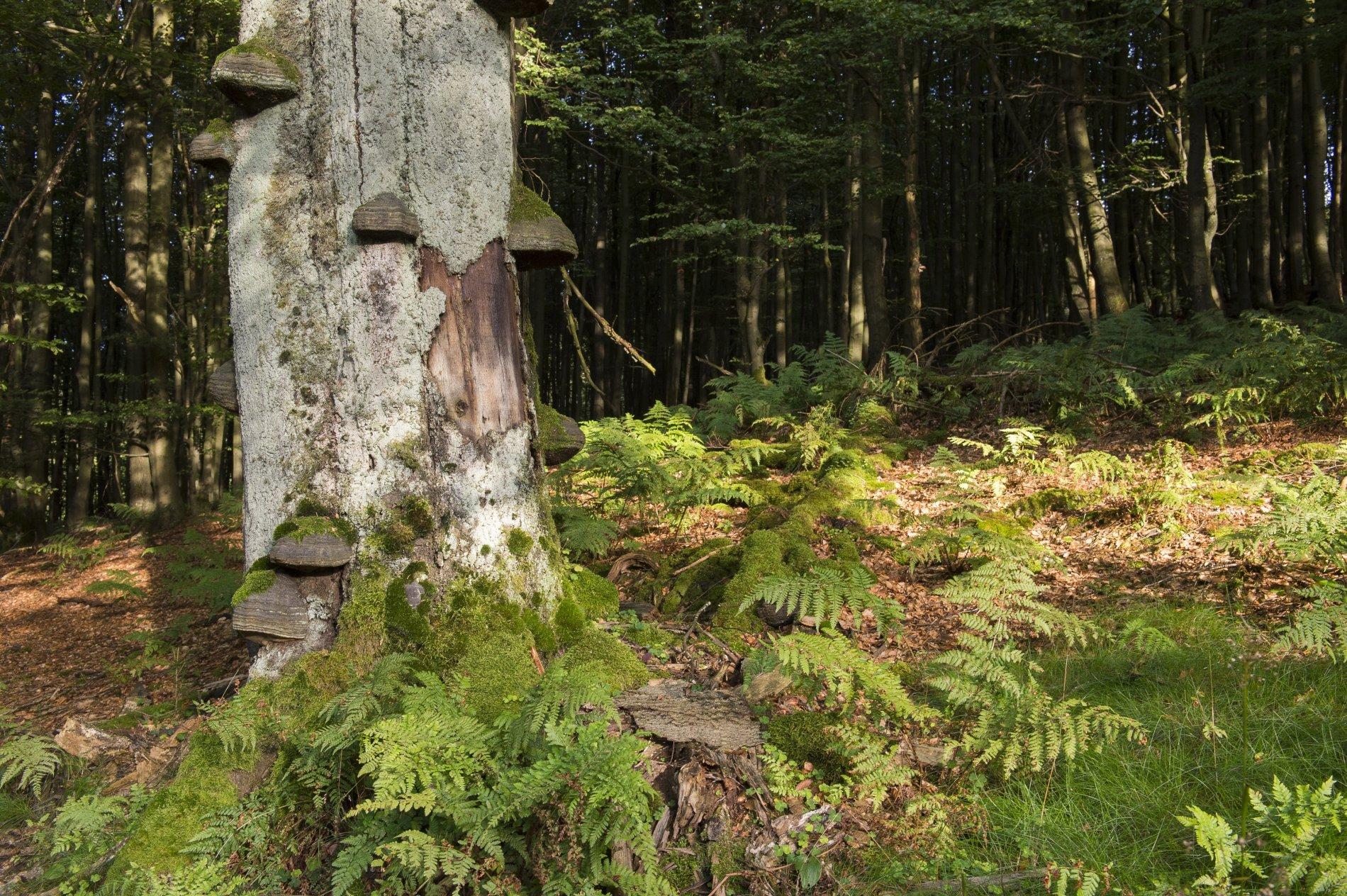 Naturschutzgebiet Nasse Wiese bei Bödefeld