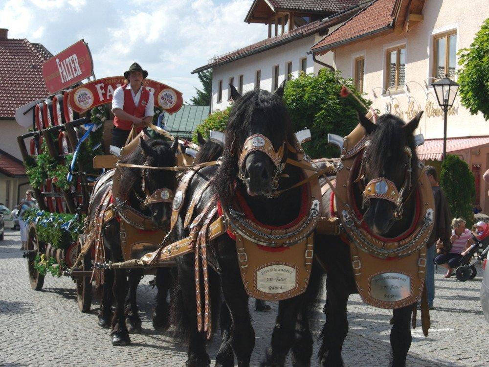 Brauerei-Pferdegespann beim Einzug zum St. Bennofest in Bodenmais