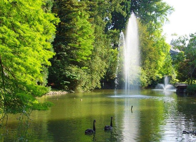 Schwanenweiher mit Wasserfontäne