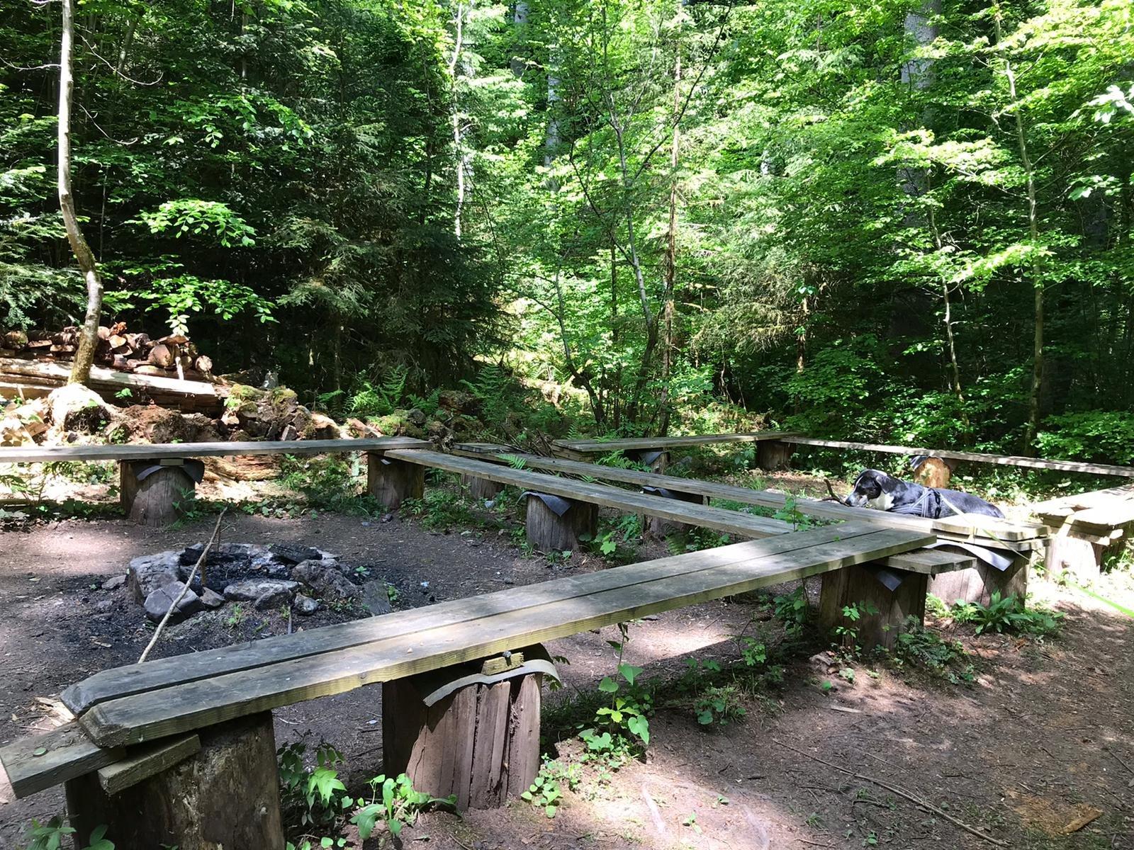 Grillplatz mit Sitzbänken im Wald