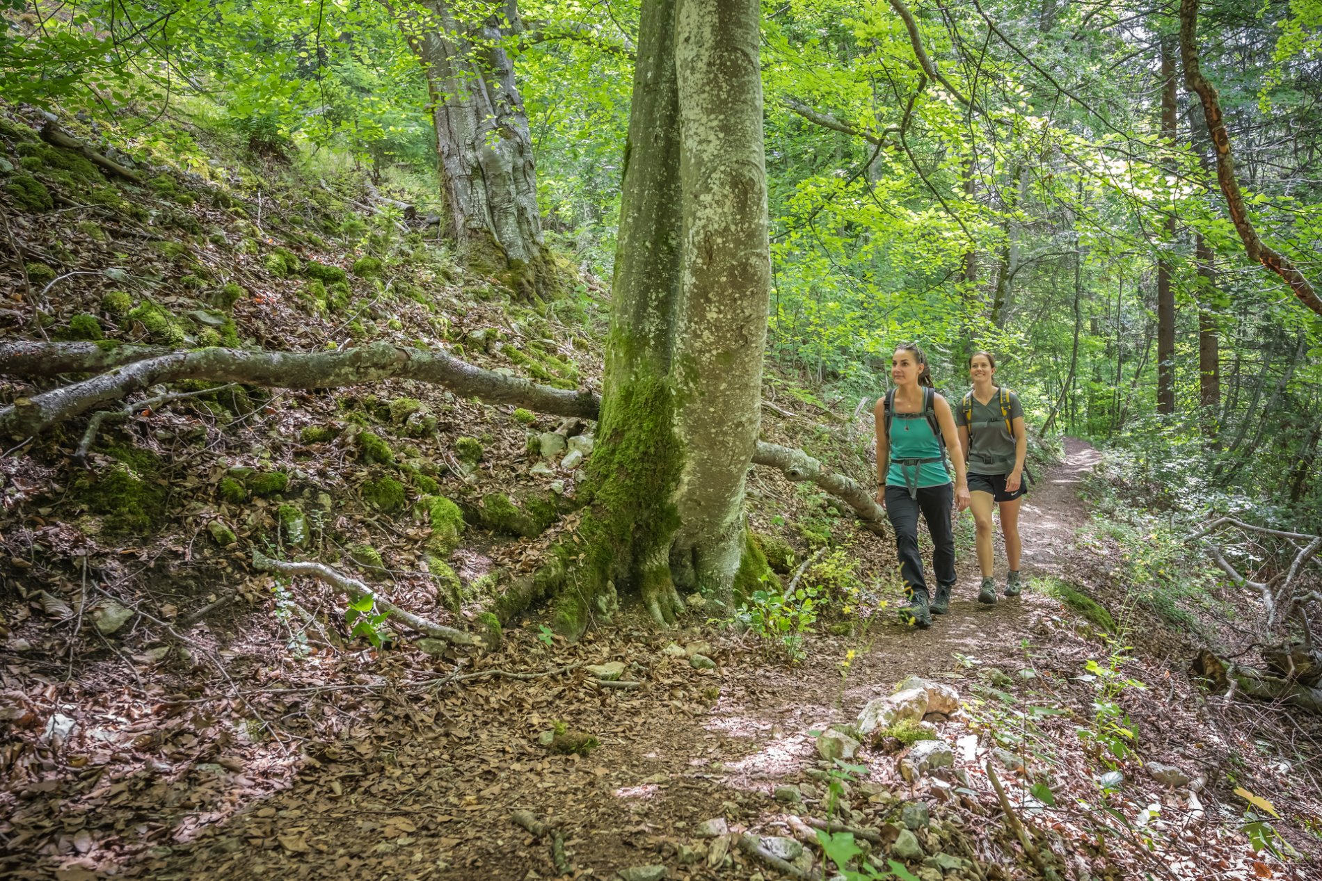 Zwei Wanderer*innen laufen einen schmalen Pfad im Wald leicht bergauf und lächeln. Durch die Blätter der Bäume blitzt hin und wieder die Sonne.