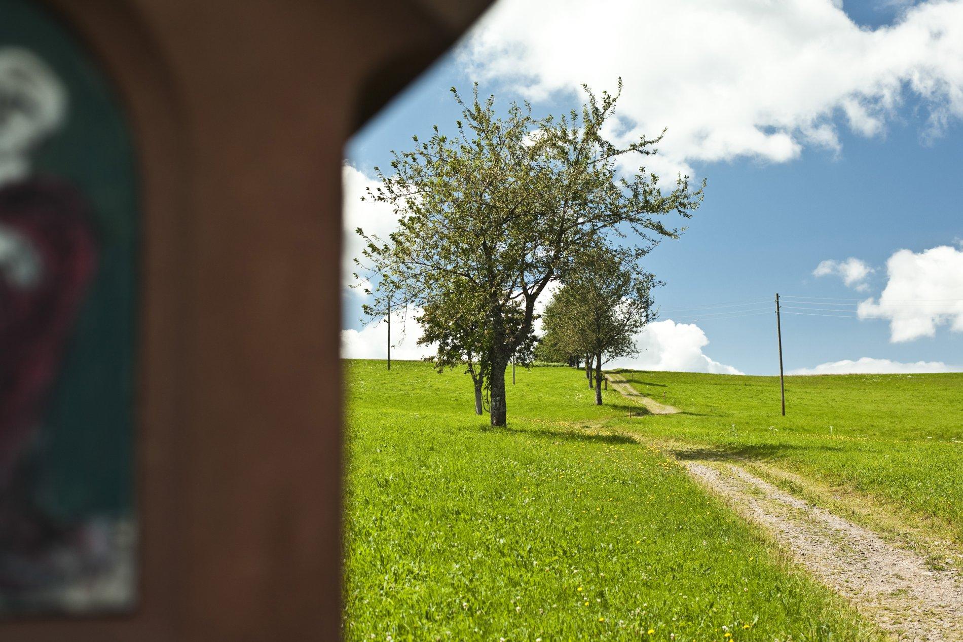 Wanderweg zum Lindenberg