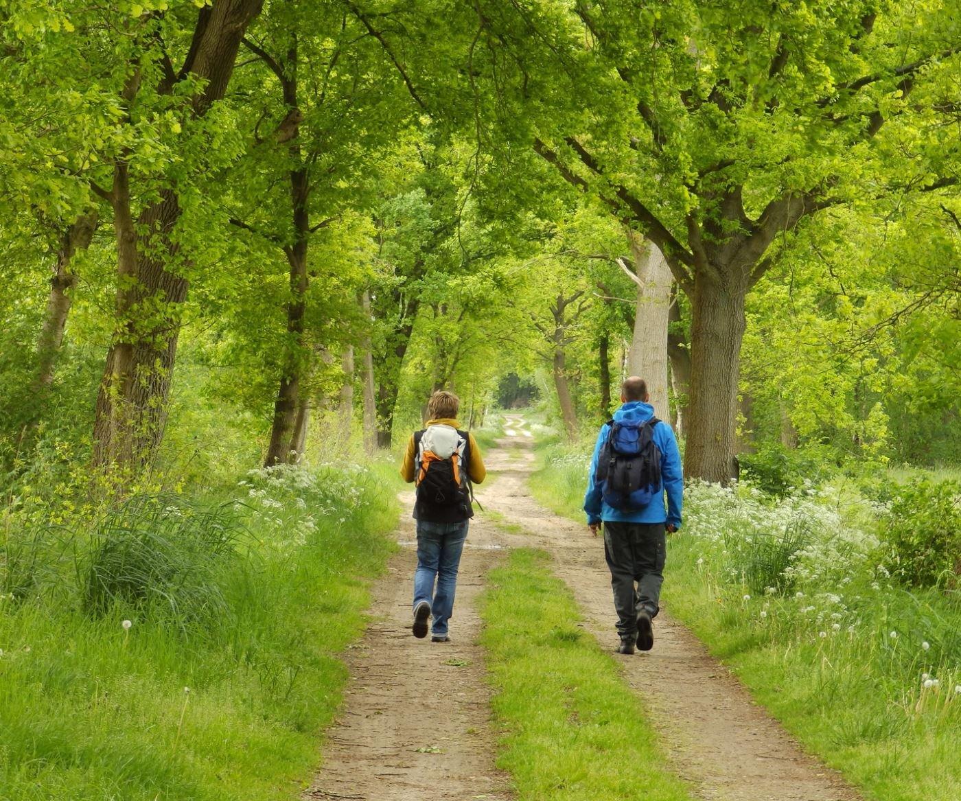 Hinterholz und Hohenmoor