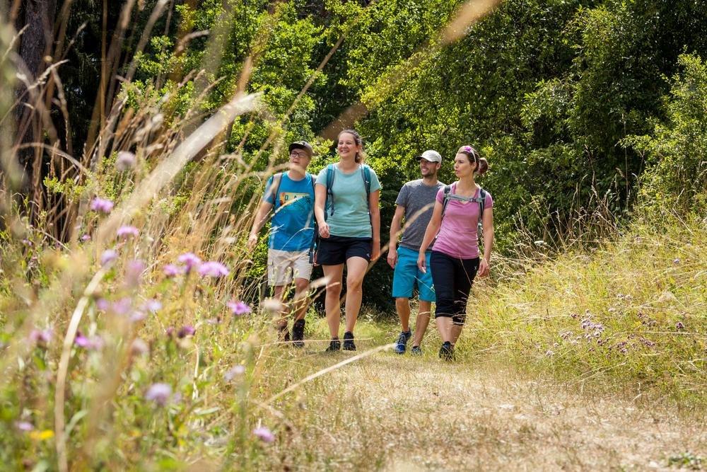 Vier Wanderer*innen laufen auf einem Weg zwischen einer Sommerwiese. Sie unterhalten sich und lächeln. Im Hintergrund ist Wald. Es ist sonnig und warm.