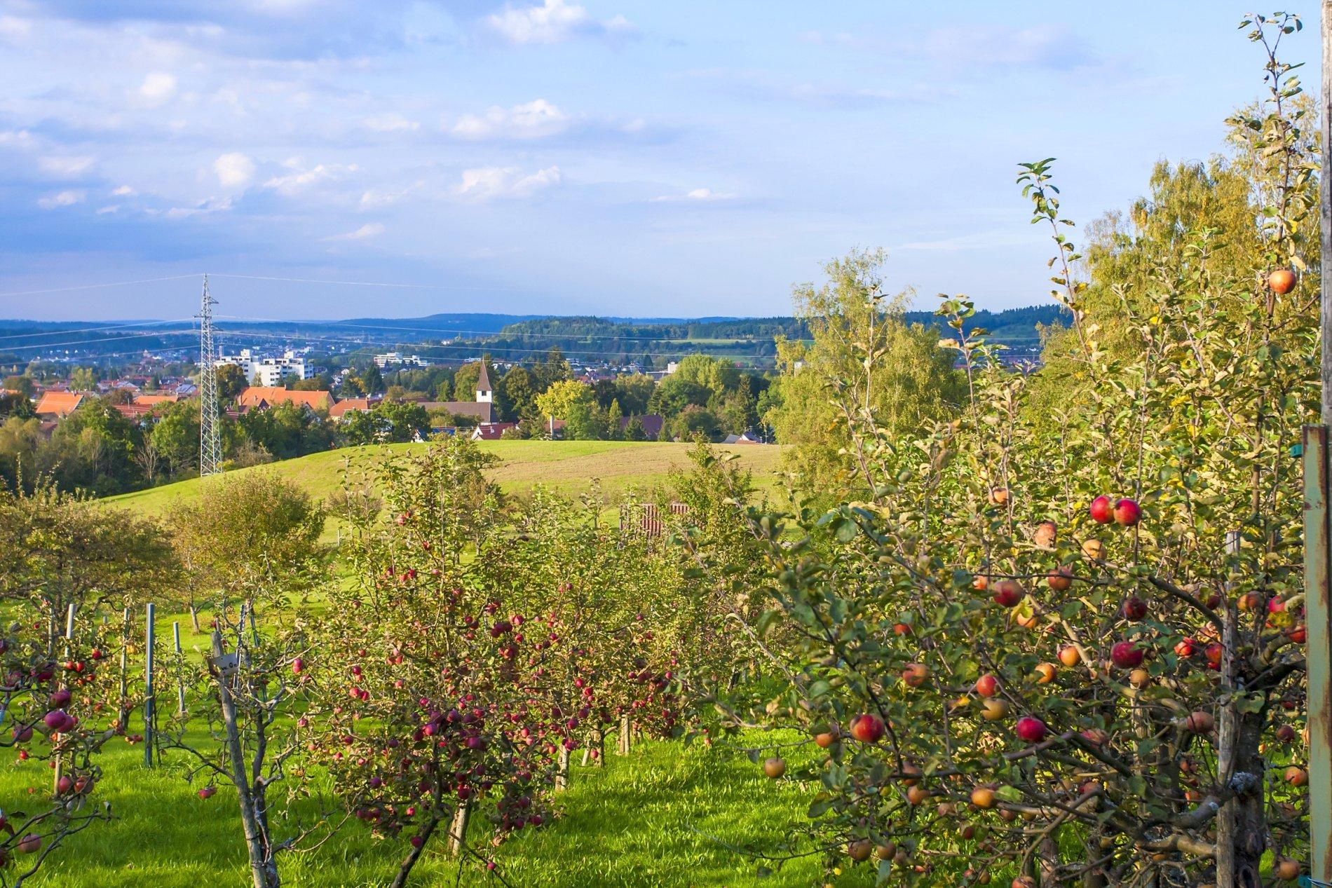 Apfelplantage mit Blick auf Weilstetten
