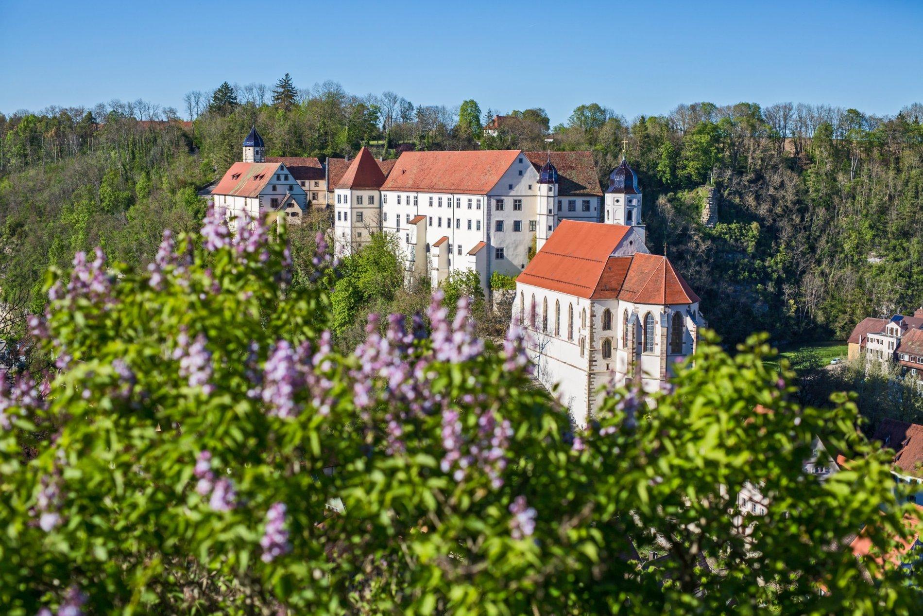 Fliederbüsche am Schloss Haigerloch