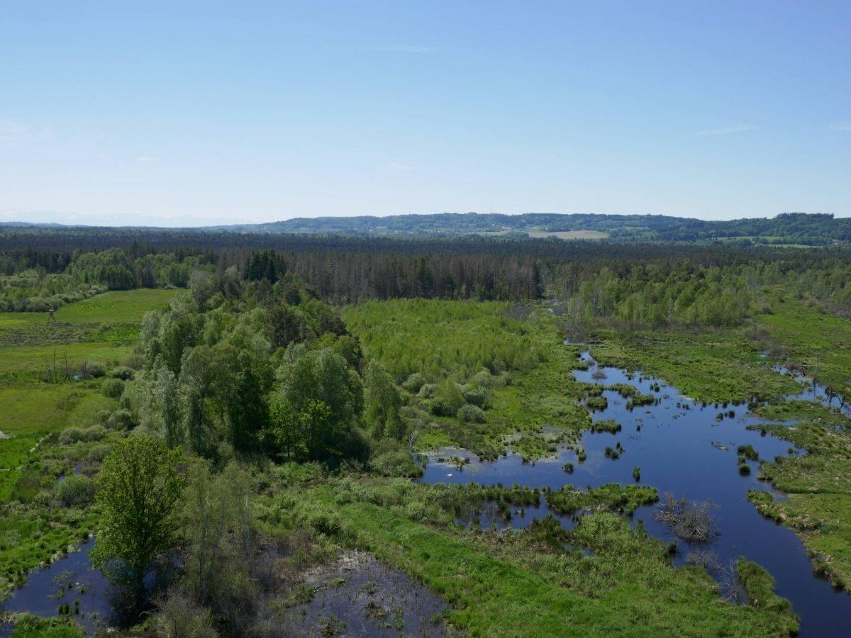 Blick vom Bannwaldturm
