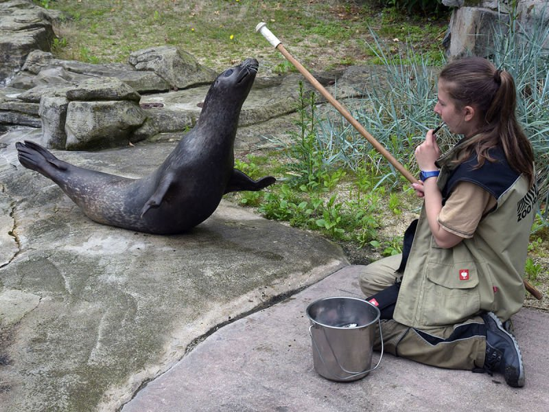 Zoo Frankfurt Seehundfütterung