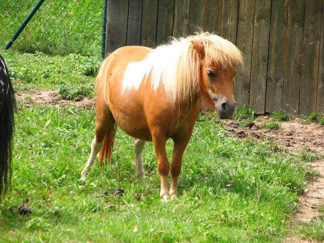 Pony auf dem Erlenhof