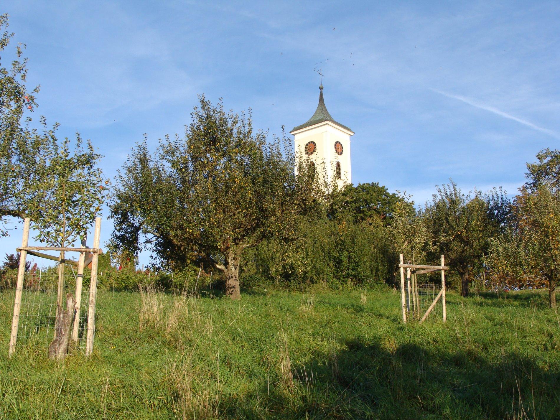 Obstbäume und Kirche
