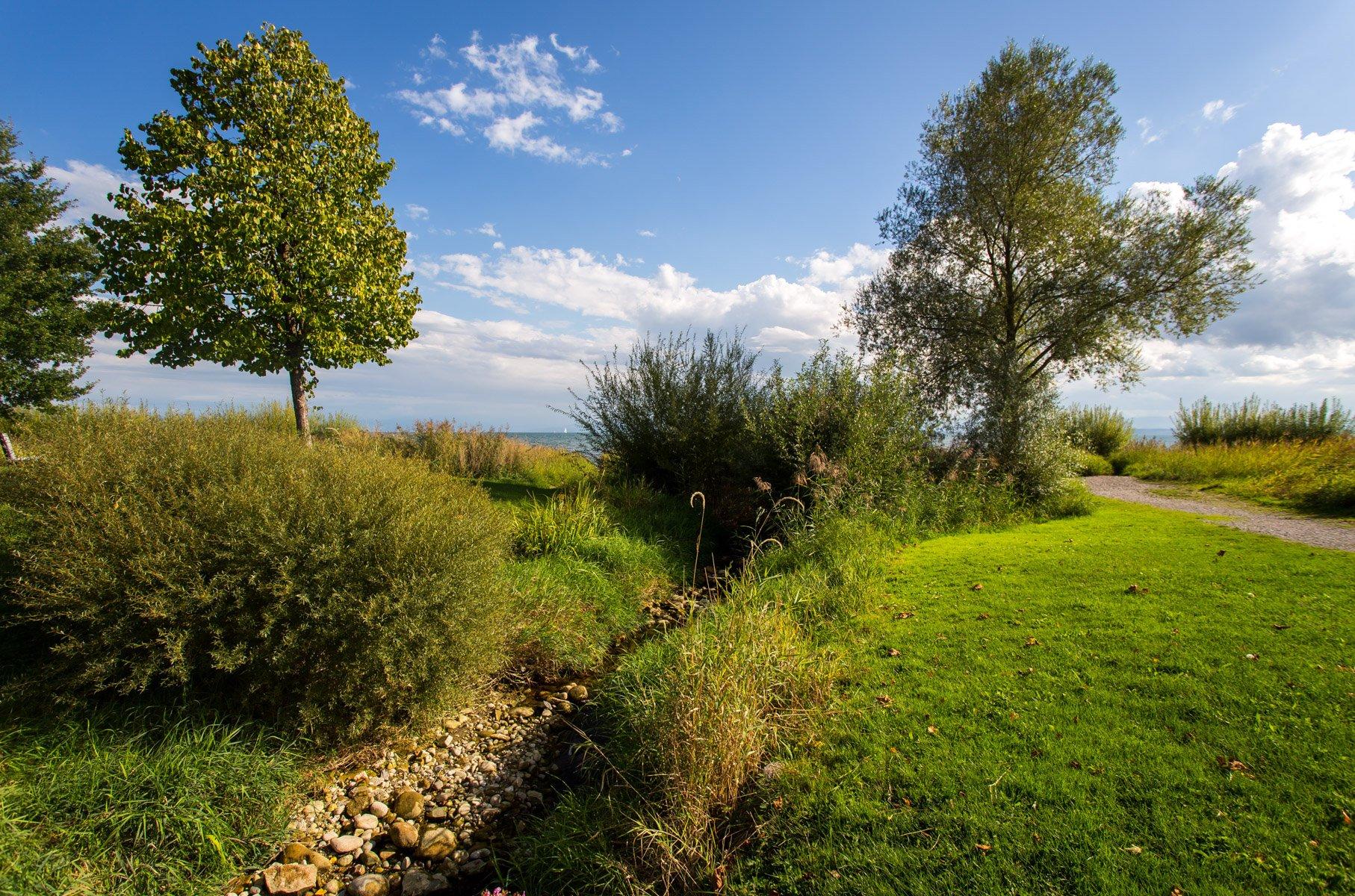 Kniebach und Wiese mit Bäume im Naturschutzgebiet