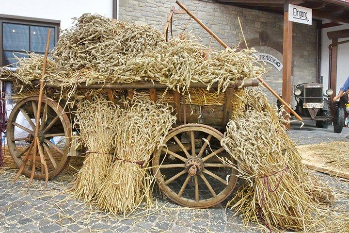 Alter Holzanhänger beladen mit gedroschenem Weizen