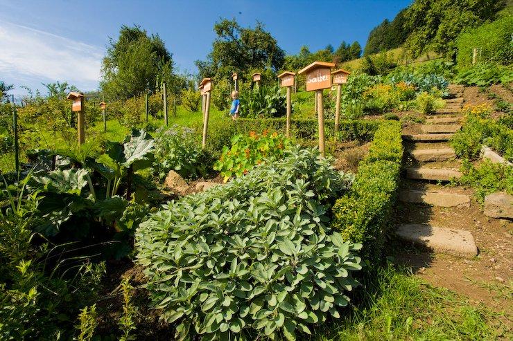 Kräutergarten auf dem Heidenbühlhof / Urheber: Ferienlandschaft Mittlerer Schwarzwald/Ralph Weber