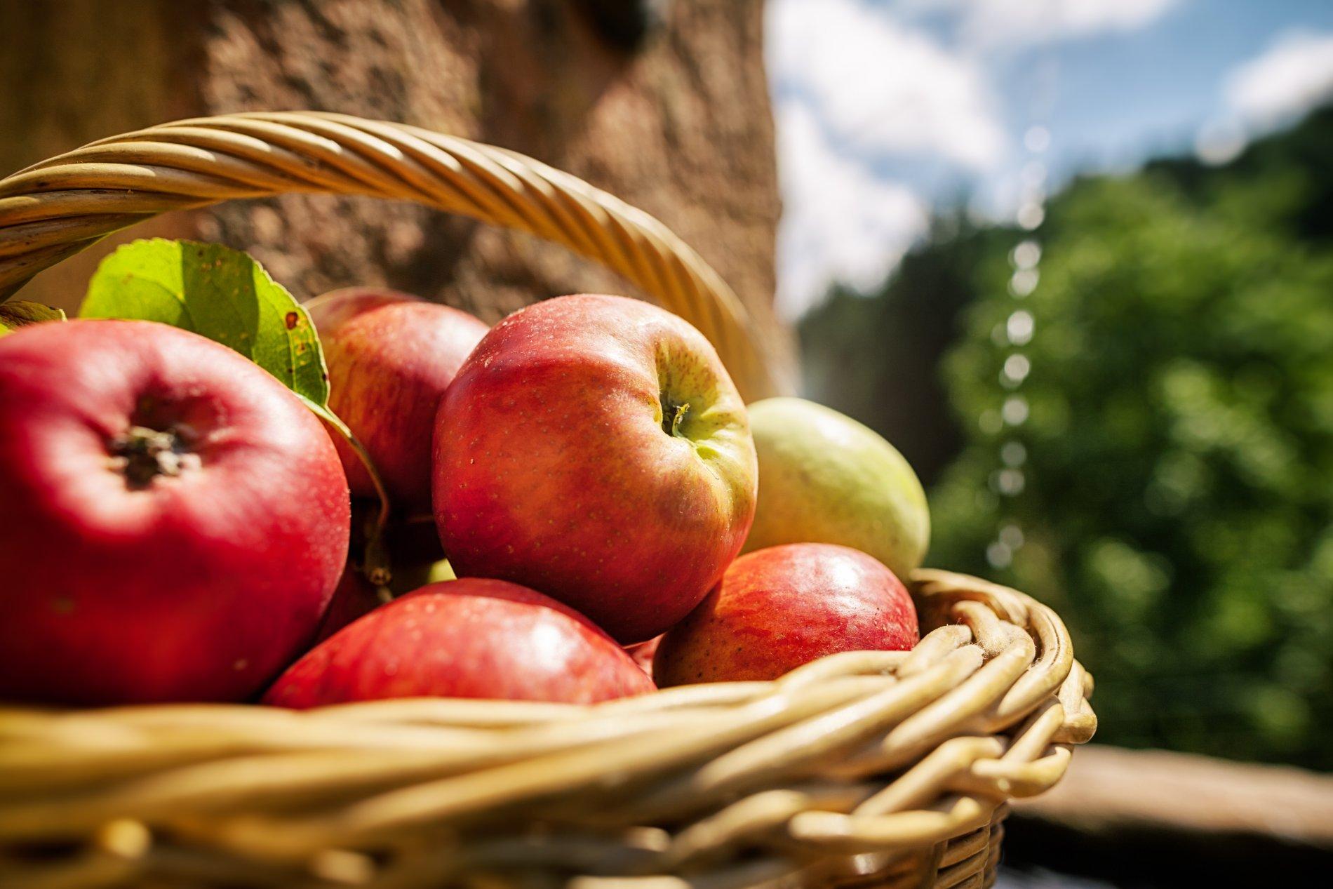 Frische Äpfel / Urheber: Gemeinde Oberharmersbach