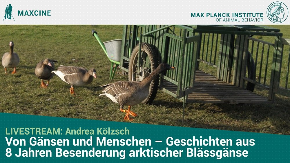 Online Vortrag MaxCine