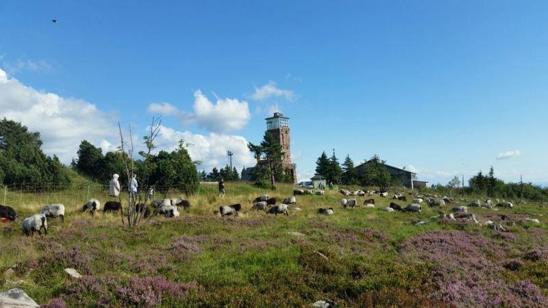 Blick zum Hornisgrinde-Aussichtsturm