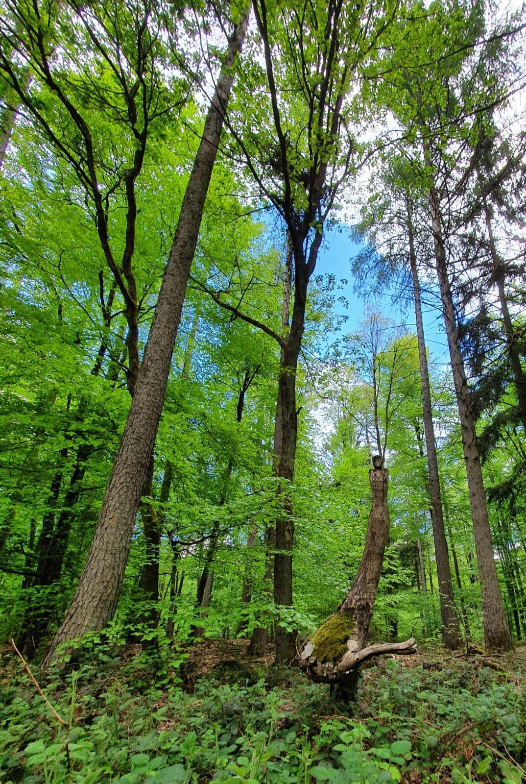 Wald im Biosphärenreservat Bliesgau