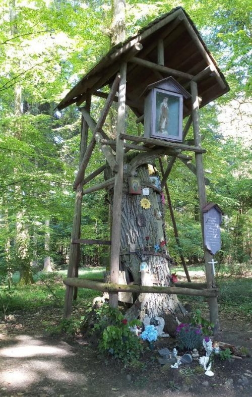 Muttergotteseiche im Neidlingwald Pfullendorf
