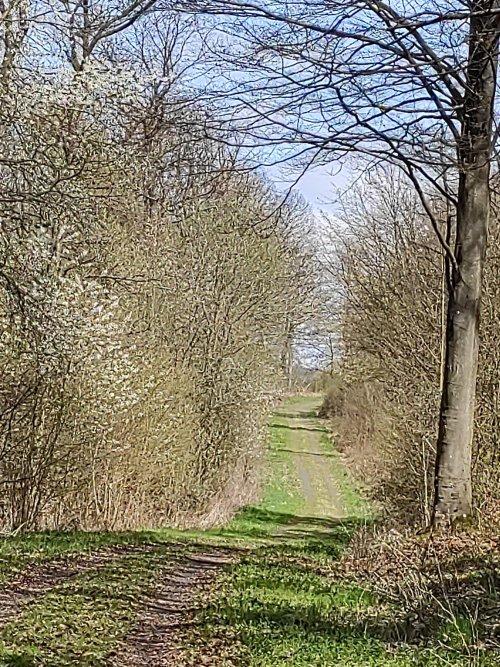 Wanderweg in Frühling