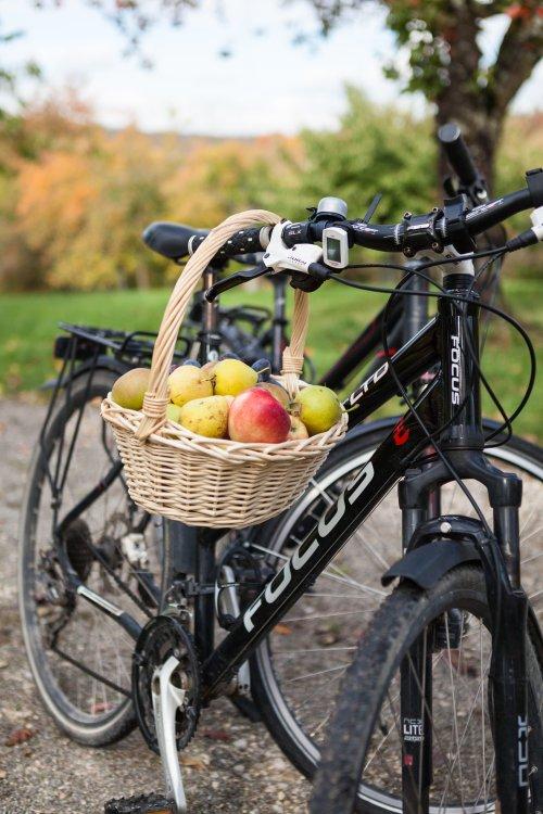Ein Korb voller Äpfel hängt an einem Fahrrad.