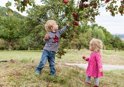 Zwei Kinder pflücken Äpfel.