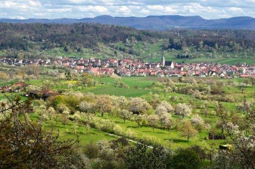 Blick vom westlichen Schönbuchrand auf grüne Streuobstwiesen mit dem Dorf Hagelloch im Hintergrund