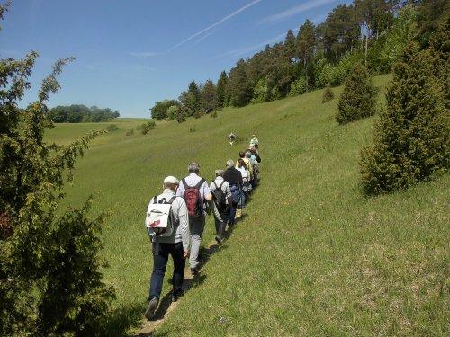 Eine Wandergruppe läuft auf einer Wacholderheide den Hang hinauf.