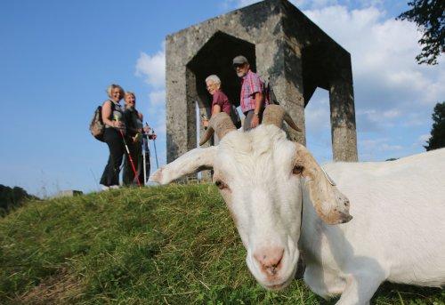 Mit den Ziegen auf dem Burgberg