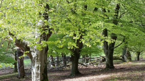 Frisches Grün und alte Bäume