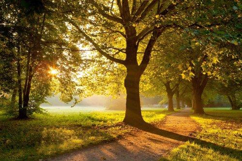 Wunderschöne Allee im Kurpark Bad Krozingen