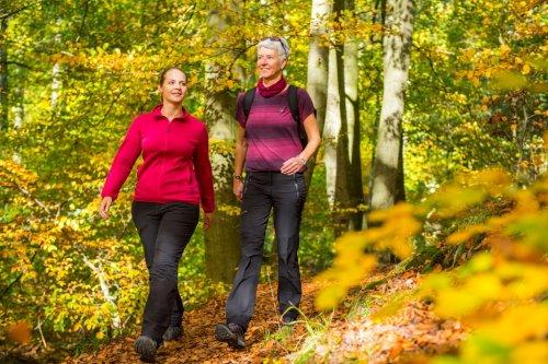 Wandern im Herbstlaub in der Klamm des Firnsbachtales