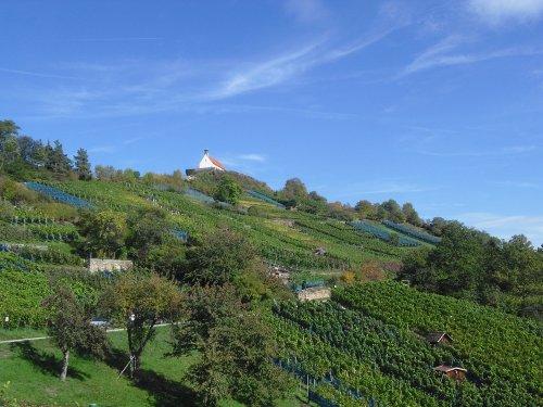 Eine Kapelle auf einem Berg mit Weinbergen.